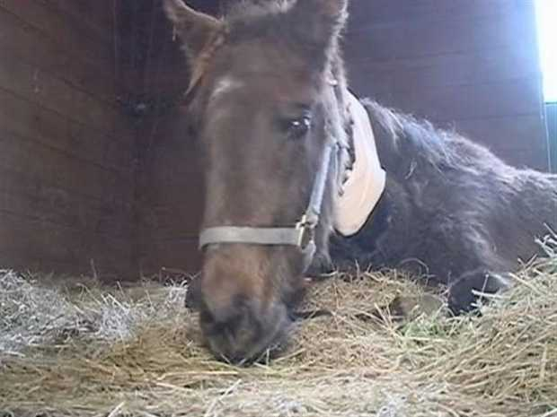 Jan. 10, 2012: The Louisiana Horse Rescue, LSU School of Veterinary and volunteers rescued 50 thoroughbred horses from a farm near Natchitoches. Central Louisiana authorities said the task of rescuing the animals was beyond the scope of their mandate. Read the story