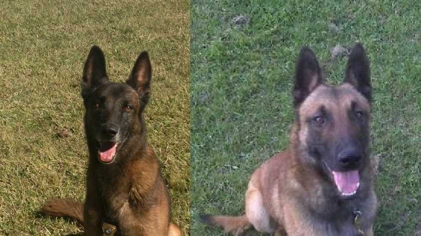 Missing police dogs