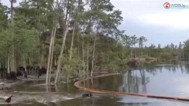 Massive sinkhole swallows trees in Assumption Parish