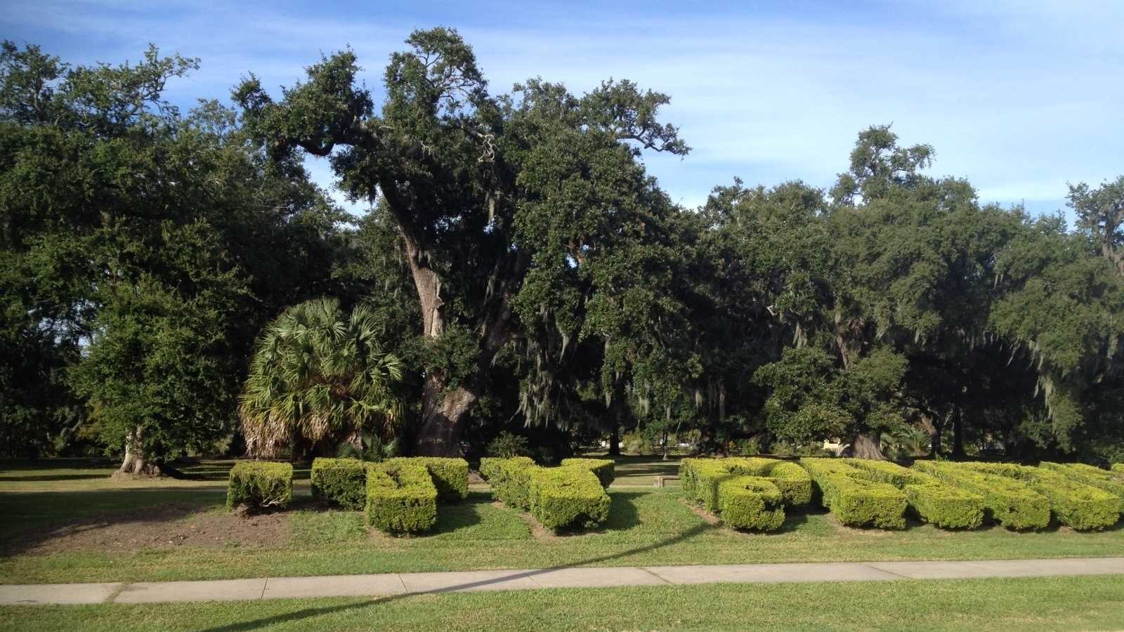 CIty park hedges cut.jpg