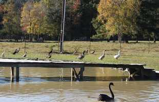 Officials with City Park didn't disclose the location of the new home, but did say the home was that of a family who has other birds, including ducks and geese.
