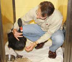 The swan was brought to the West Esplanade VeterinaryClinic and Bird Hospital in Metairie. Dr. Gregory Rich and his staff cared for her.