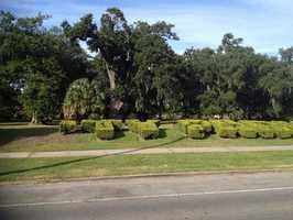 "October 2013: A City Park worker accidentally cut down nearly two letters from the historic bushes that spelled out ""City Park."" The accident outraged residents and the bushes were eventually replaced. Read initial report"