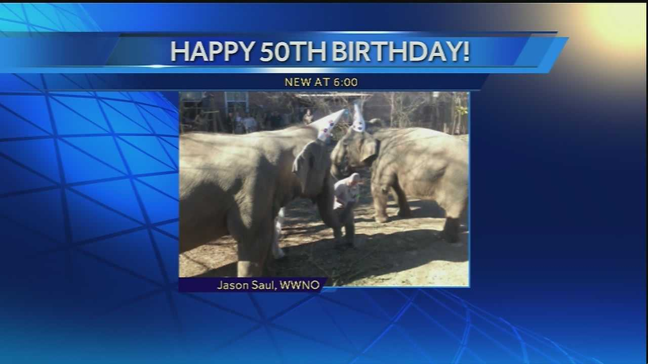 Panya, one of Audubon's Asian elephants, celebrated her 50th birthday on Thursday.