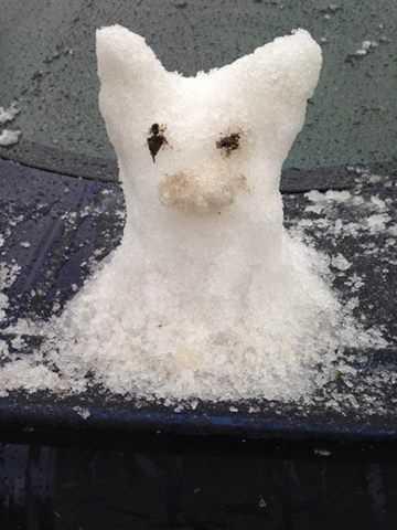 From: Alyssa CuquetTitle: Snowpy