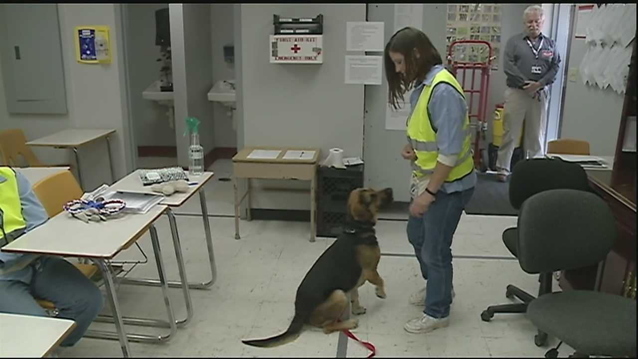 """From the Dog House, to the Big House"" is currently being implemented in two Louisiana Prisons: Rayburn Correctional Center in Washington Parish for men, and the Louisiana Correctional Institute for Women in St. Gabriel."