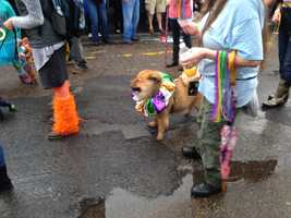 Wet dogs don't care if it rains! They'll parade in any condition. On Sunday, pups pranced in the Vieux Carré for the Krewe of Barkus. Here are some of the photos from the parade! Have an image? Share it with us on u local! Just email ulocal@wdsu.com!