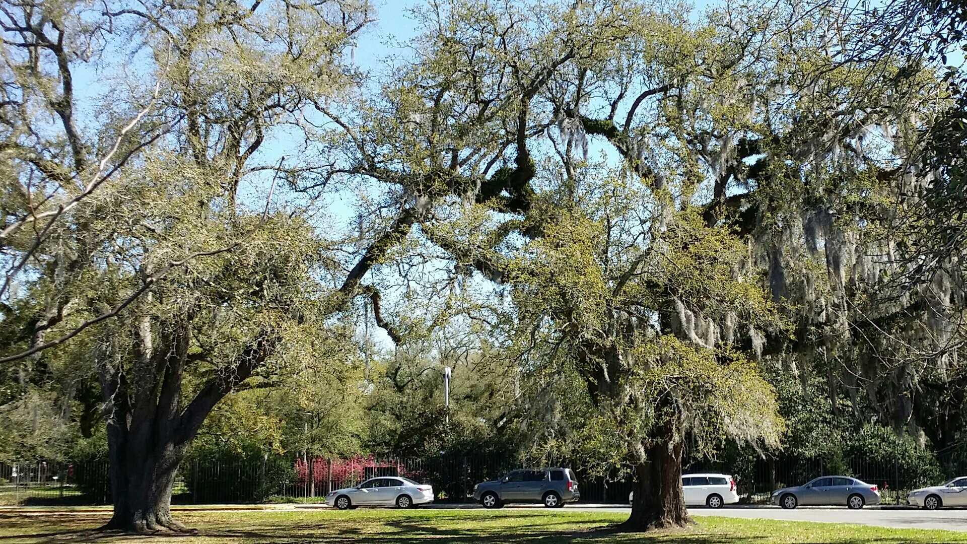 Trees leafing out - Meg Spring.jpg