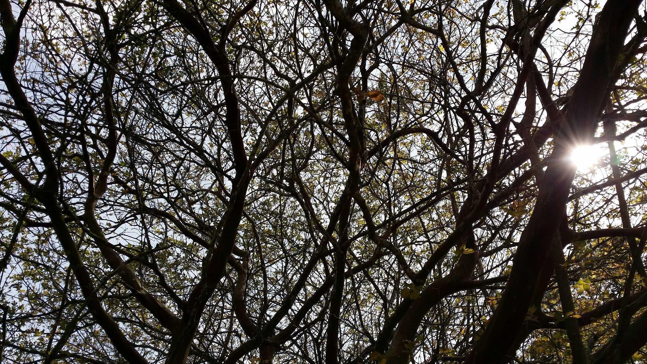 Leafing trees.jpg