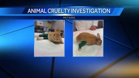 Two rabbits were bound at the legs and thrown from a vehicle in Metairie. The Louisiana SPCA is looking for the person responsible and offering a reward.