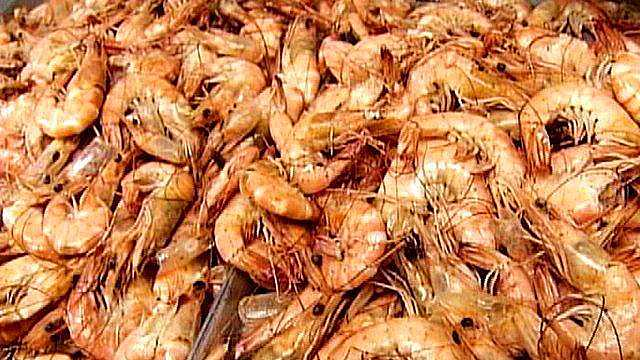 Spring shrimp seasons near end in some areas