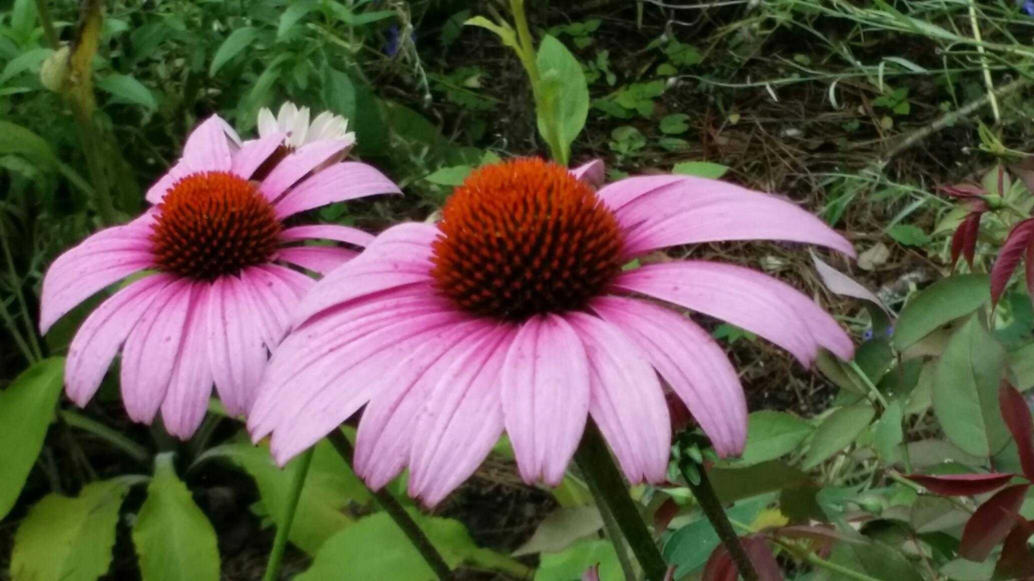 5 grandes plantas perennes para plantar este otoño | DoItYourself.com