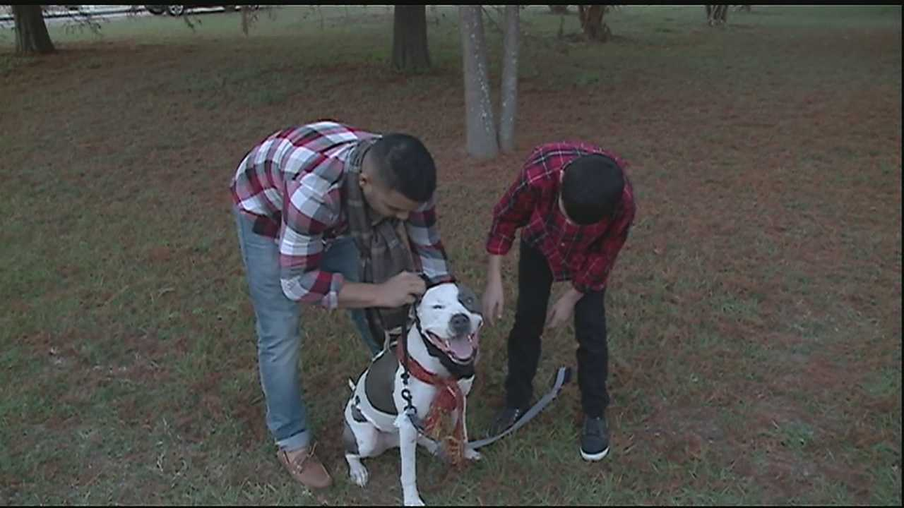 Pet owners in Orleans Parish can expect to receive notices in the mail this week about a law requiring pets be spayed or neutered or have an intact permit.