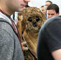 An Ewok, queued up to get its tickets.