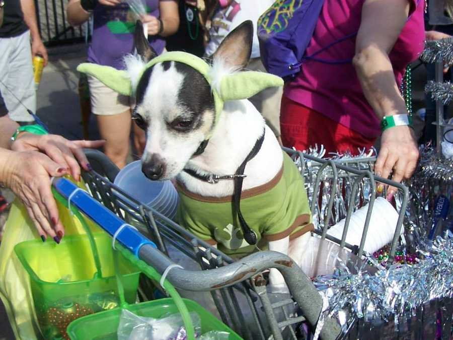 "The Mystic Krewe of Barkus made the jump to light speed on Sunday with the theme to its annual parade being ""Bark Wars."" Here are some photos from the furry fun frolic through the French Quarter on Sunday."