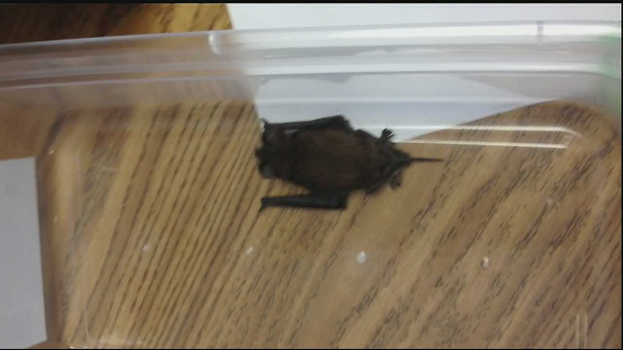 Parents were breathing a sigh of relief Thursday after bats forced teachers and students at a New Orleans-area school to find a new location for classes.