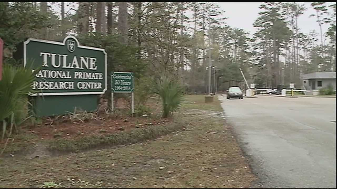 According to a Tulane University spokesperson, an employee at the school's primate research center near Covington tested positive for low levels of exposure to a bacteria that has sickened nearly a dozen primates at the Northshore facility since November.