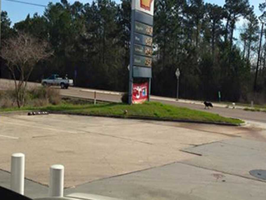 The Humane Society of Louisiana said a dog was seen chasing its owner, who apparently abandoned the animal at a gas station in Slidell.