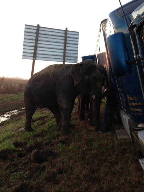 A stranded 18-wheeler semi on Interstate 49 in Natchitoches Parish would have overturned if two elephants hadn't intervened.