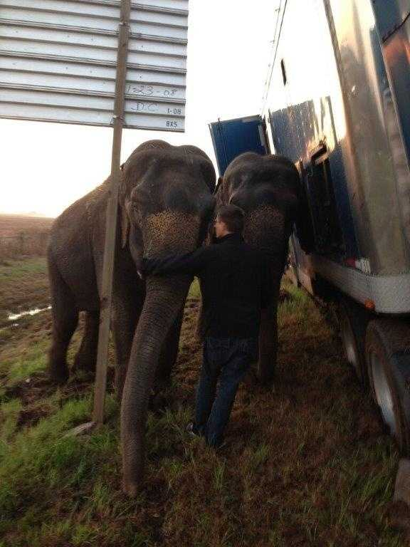 When deputies arrived at the scene, they said they were  stunned to see the two pachyderms keeping the eighteen wheeler from overturning.