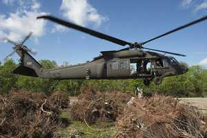 The 1st Assault Helicopter Battalion, 244th Aviation Regiment helicopter crew placed the trees in Bayou Sauvage to establish a wave break to trap sediment and restore marshland.