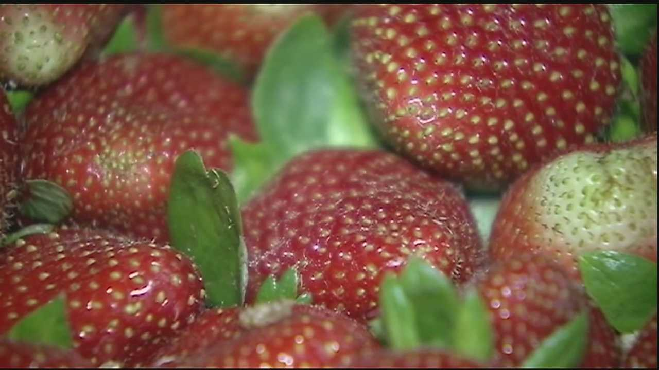 People poured into downtown Ponchatoula Friday night to enjoy everything strawberry despite some monsoon-like rains earlier in the day.