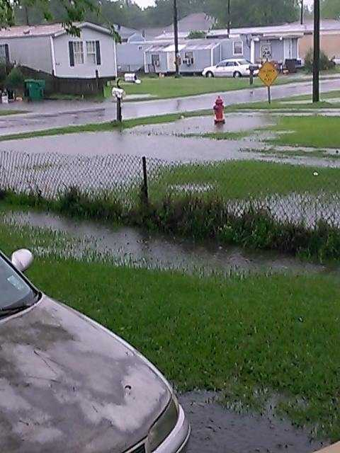 Submitted by: Elizabeth TrahanLocation: Destrehan