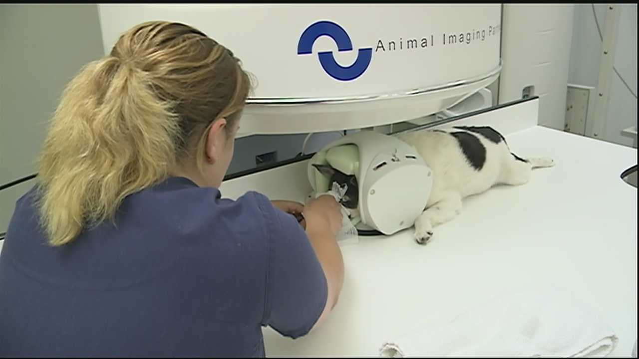 The latest technology available on the Northshore diagnoses pets, just like humans.A local animal hospital is now able to pinpoint problems in animals using an MRI scanner. We explain how it works and why it can be a lifesaving measure for your pet.
