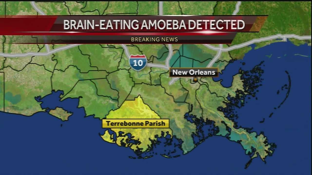 Health officials have confirmed the presence of the Naegleria fowleri amoeba in an area of Terrebonne Parish, sources told WDSU on Monday.