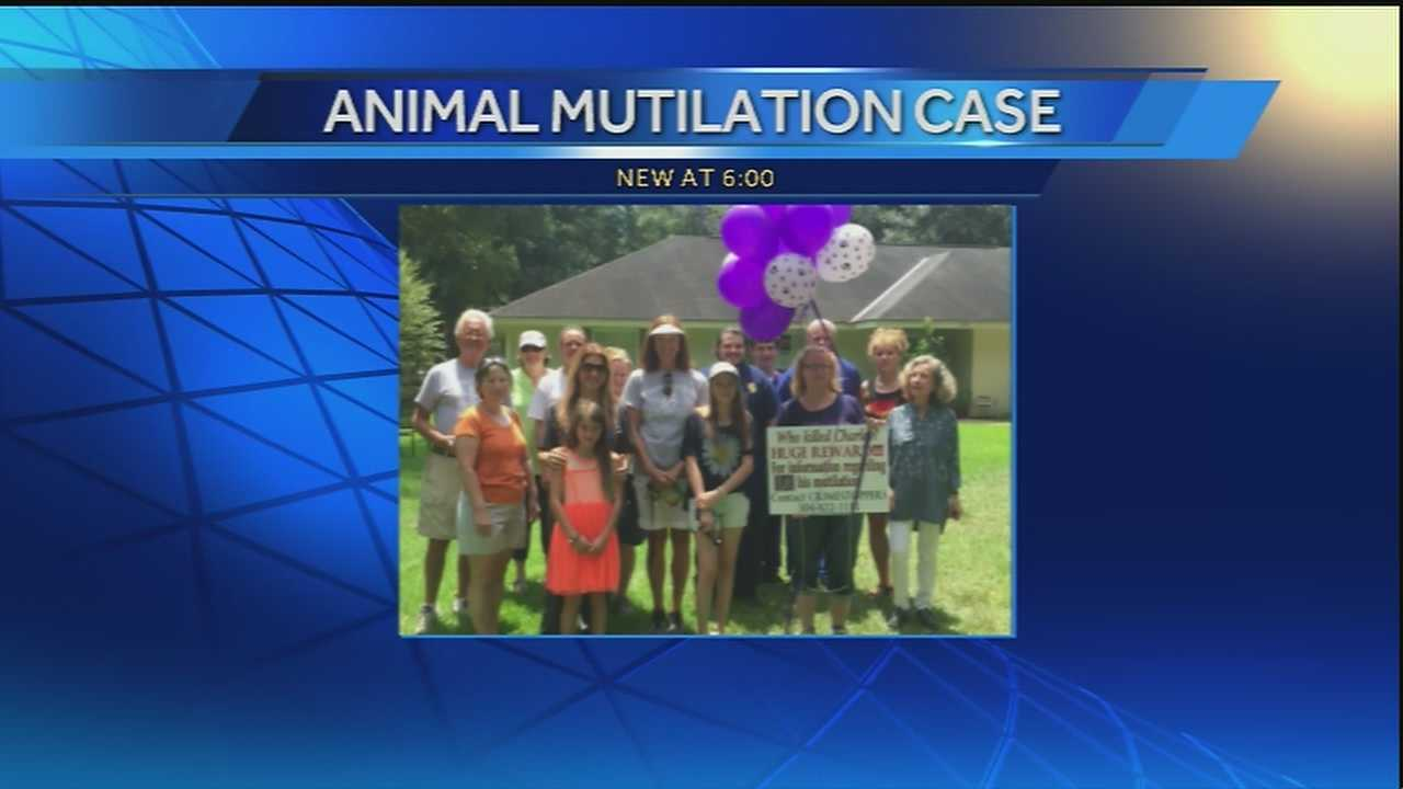 Northshore animal cruelty case helps introduce new initiatives to investigate similar cases