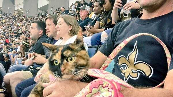 A photo of the #SaintsCat who went purrrfectly viral on social media Thursday night.