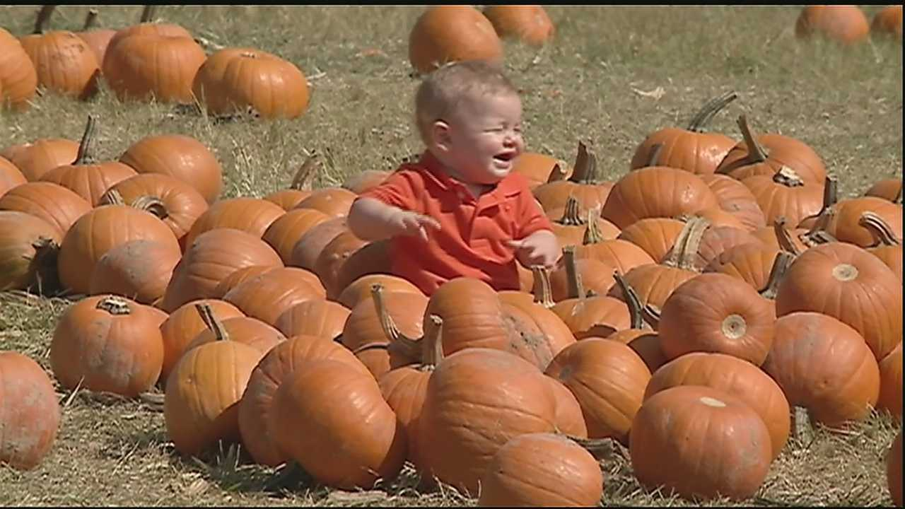 It's time to deck the porches with orange and black and pumpkins. Here's where you'll find the best pumpkins around in southeast Louisiana.