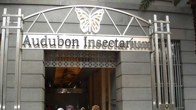 Image result for new orleans insectarium