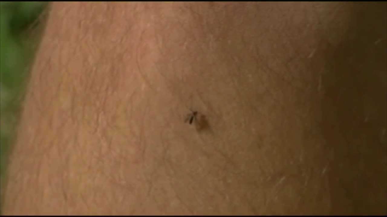 As the Zika virus continues to spread, so do questions about how to prevent the mosquito bites that carry it.