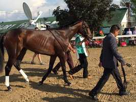 Mo Tom walking up for the Kentucky Derby (photo by Doug Fain).