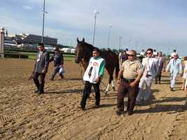 Mo Tom walking up for the Kentucky Derby (photo by Doug Fain)
