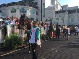 Mo Tom in the paddock at the Kentucky Derby (photo by Fletcher Mackel).