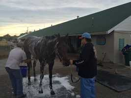 Mo Tom getting a bath (photo by Fletcher Mackel)!