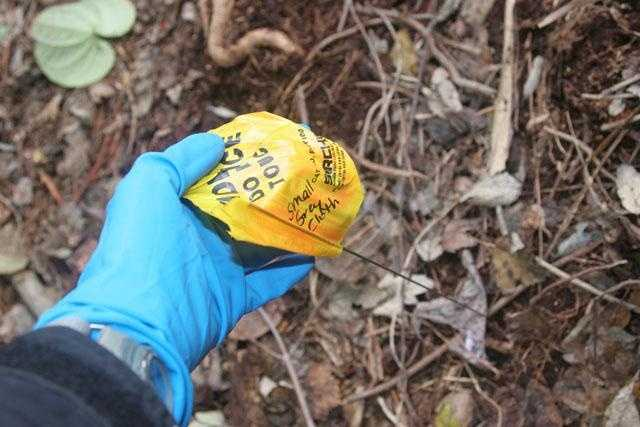 An investigator plants an evidence marking flag in the woods where Caylee Anthony's body was discovered.
