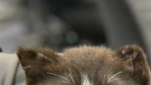 Kitten recovering after severe abuse in Palm Coast