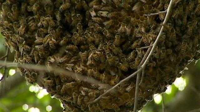 Beehive causes problems for Orange Co. neighborhood