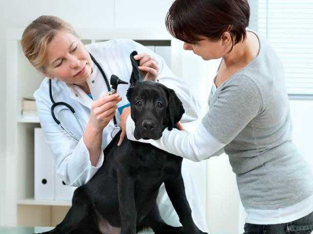 9. Veterinary Technologists and Technicians - 32.9% growth (+3,445 jobs) - $13.94