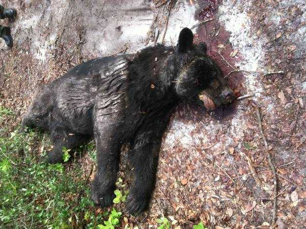 Officers said they began investigating the incident when they received a report of a dead bear lying on a dirt road near the forest.