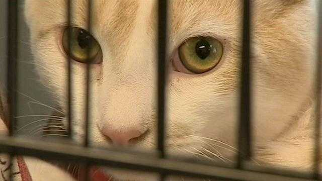 An explosion in the number of cats and kittens has one local shelter willing to do almost anything to get them adopted.