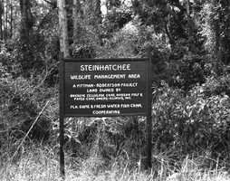 "Steinhatchee (Taylor County): The name is derived from the Muskogee ""ak"" (down), ""isti"" (man) and ""hatchee"" (creek). It means ""dead man's creek.""  The Wildlife Management Area in Steinhatchee is shown in this 1980s picture."