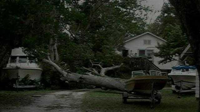 Large oak tree down in Daytona Beach.