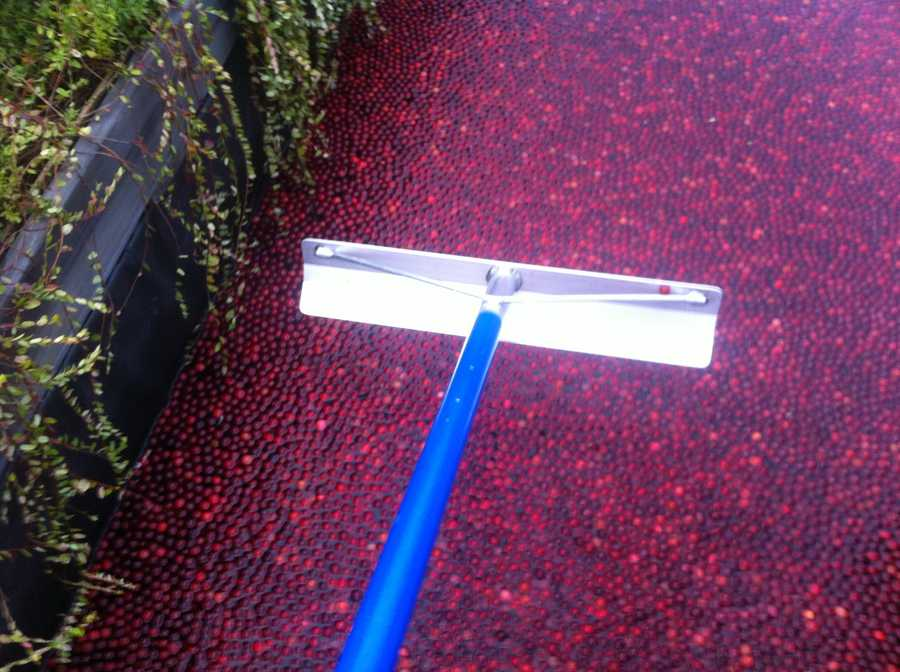 Ocean Spray provides a cranberry rake to use, but that's just for show.