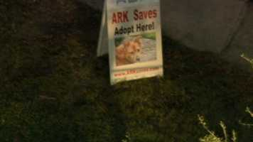Animals had to be rescued from an animal rescue group of all places.