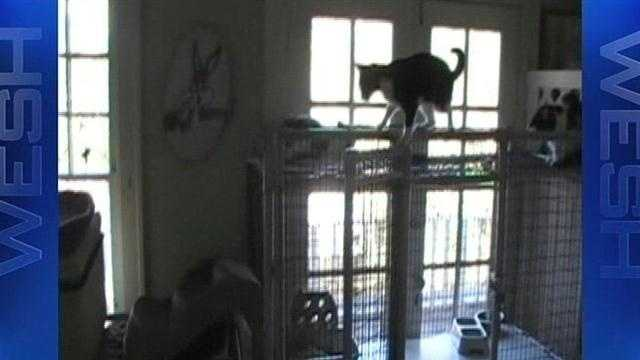 """The owners of a shelter said to be in """"deplorable"""" conditions appeared at a court hearing Monday."""