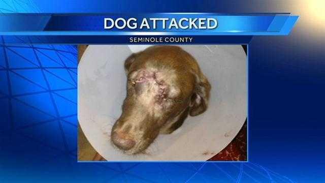 Dog attacked